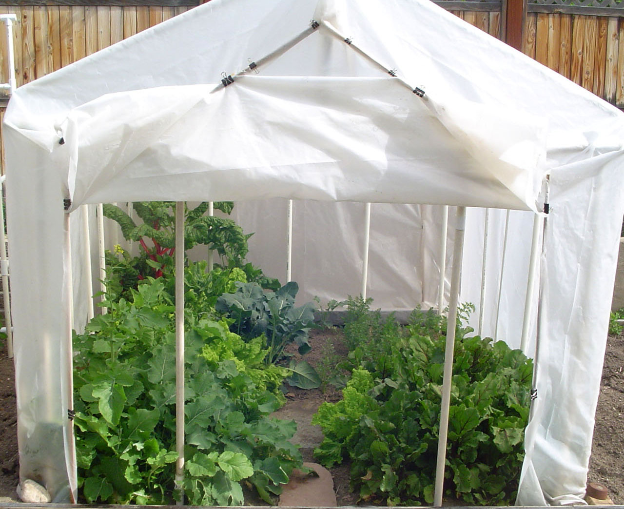 More food from small spaces by margaret park - Small space farming image ...